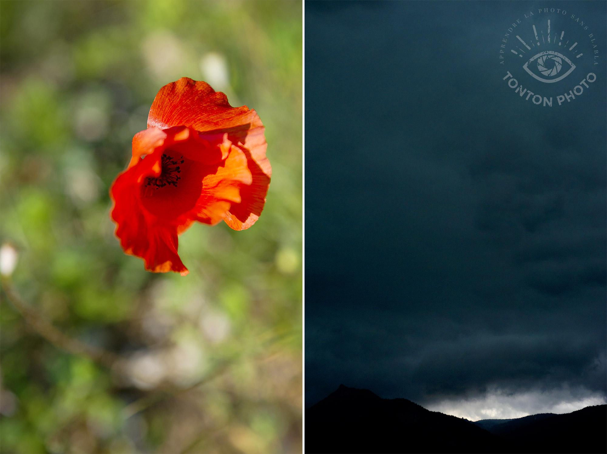Rouge intense du coquelicot au soleil, et ciel d'orage au crépuscule © Clément Racineux / Tonton Photo