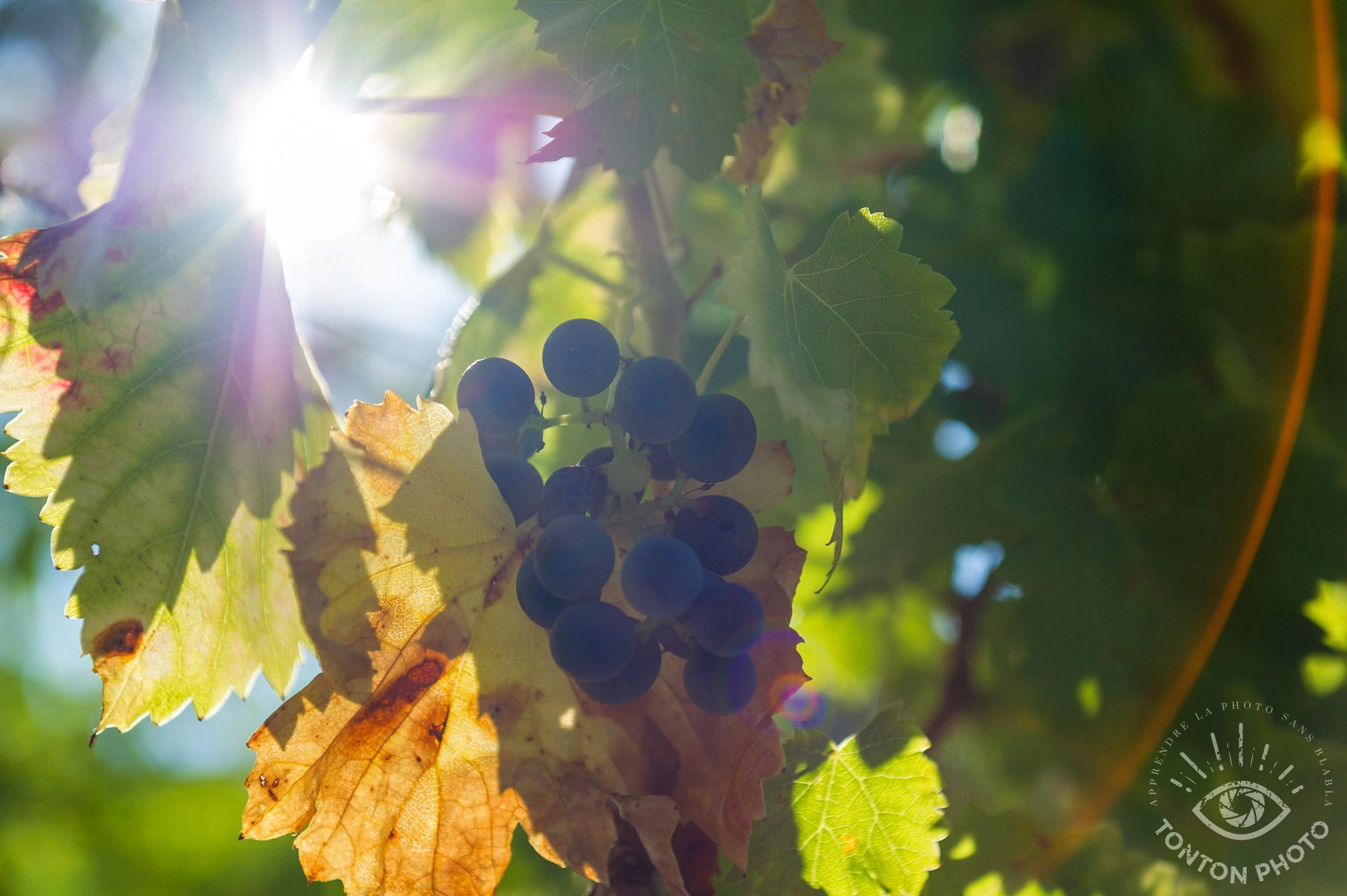 Dans le vignobles de Vinsobres (Drôme), baigné de soleil © Clément Racineux / Tonton Photo