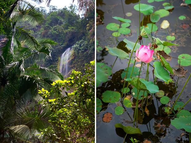 Ambiance sauvage digne du livre de la jungle ! Sumatra, Indonésie © Clément Racineux / Tonton Photo