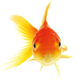 Et bien alors, on a une mémoire de poisson rouge ? © Tonton Photo