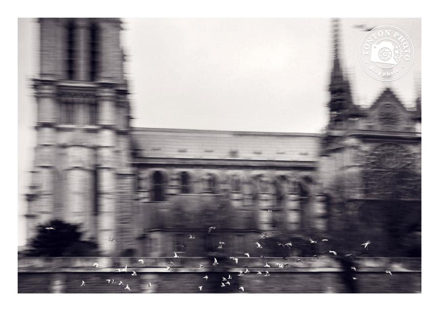 Filé d'un vol de pigeons autour de Notre-Dame de Paris - Comment photographier les oiseaux ? - Tonton Photo