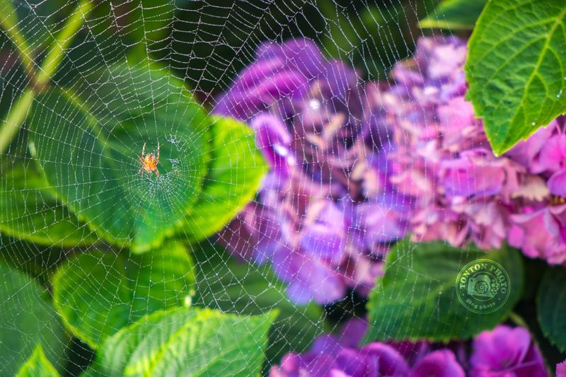 Test utilisateur du Fujifilm X-E1 : photo d'une toile d'araignée © Clément Racineux / Tonton Photo