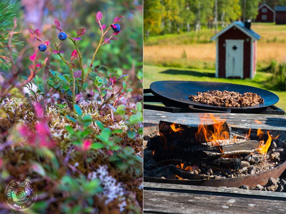 À gauche : la végétation rase typique de la taïga. / À droite, un bon barbecue de viande de renne :) Laponie suédoise © Clément Racineux / Tonton Photo