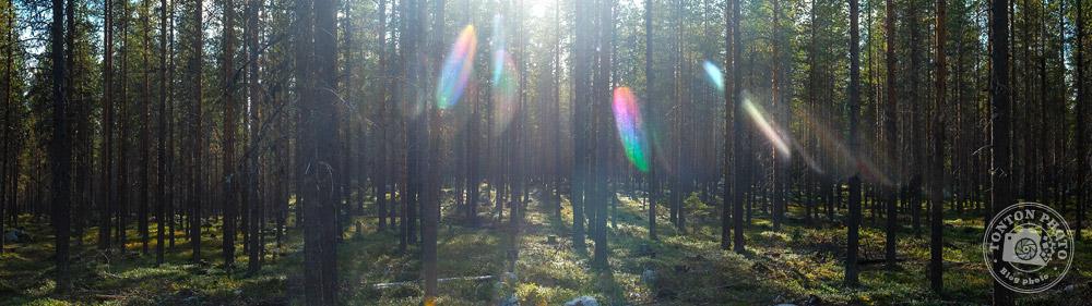 Paysage typique de la taïga, magnifique forêt de ces terres boréales... Laponie, Suède © Clément Racineux / Tonton Photo