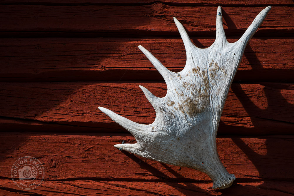Bois d'élan. Laponie Mush, Suède © Clément Racineux / Tonton Photo