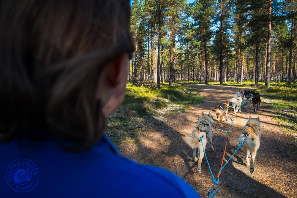 Les chiens de traîneau en plein entraînement d'été : ils tirent un quad à travers la taïga. Laponie, Suède © Clément Racineux / Tonton Photo