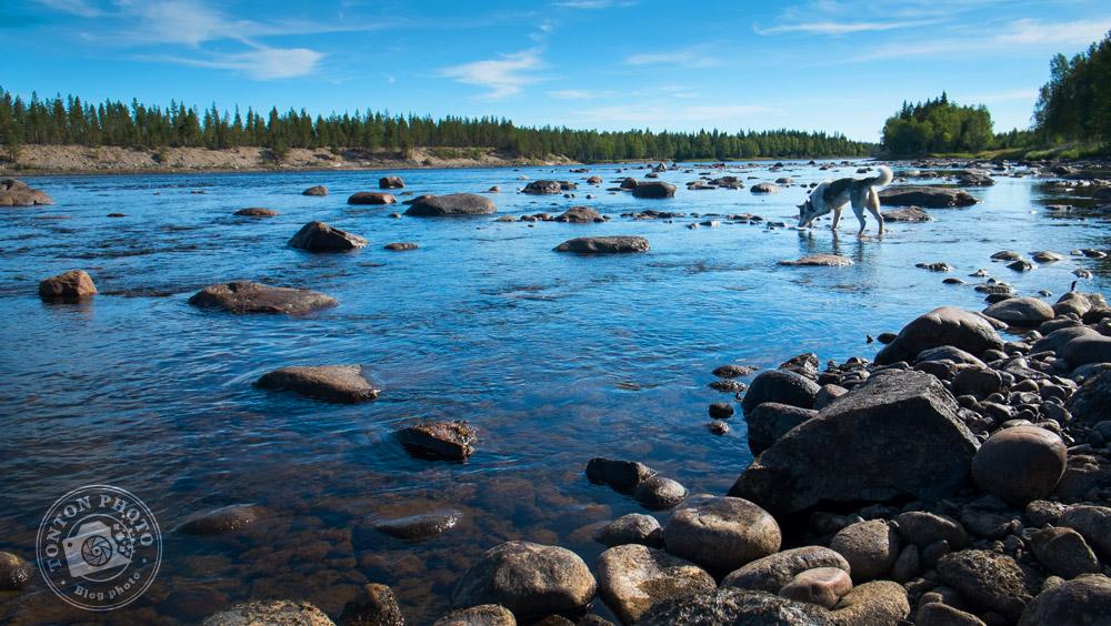 Promenade solitaire et sauvage, accompagné de la belle Inou, une chienne Alaskan Husky (enfin je crois) espiègle et très affectueuse... le bonheur :) Laponie, Suède © Clément Racineux / Tonton Photo