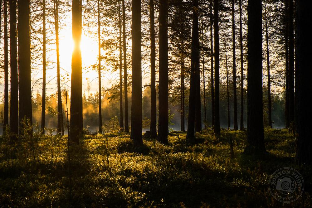 Le soleil se lève sur la Taïga, Laponie suédoise © Clément Racineux / Tonton Photo