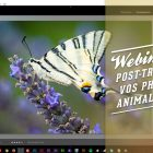 Webinaire : quelles sont les notions de base à connaître pour le développement numérique de vos photos animalières / nature ?