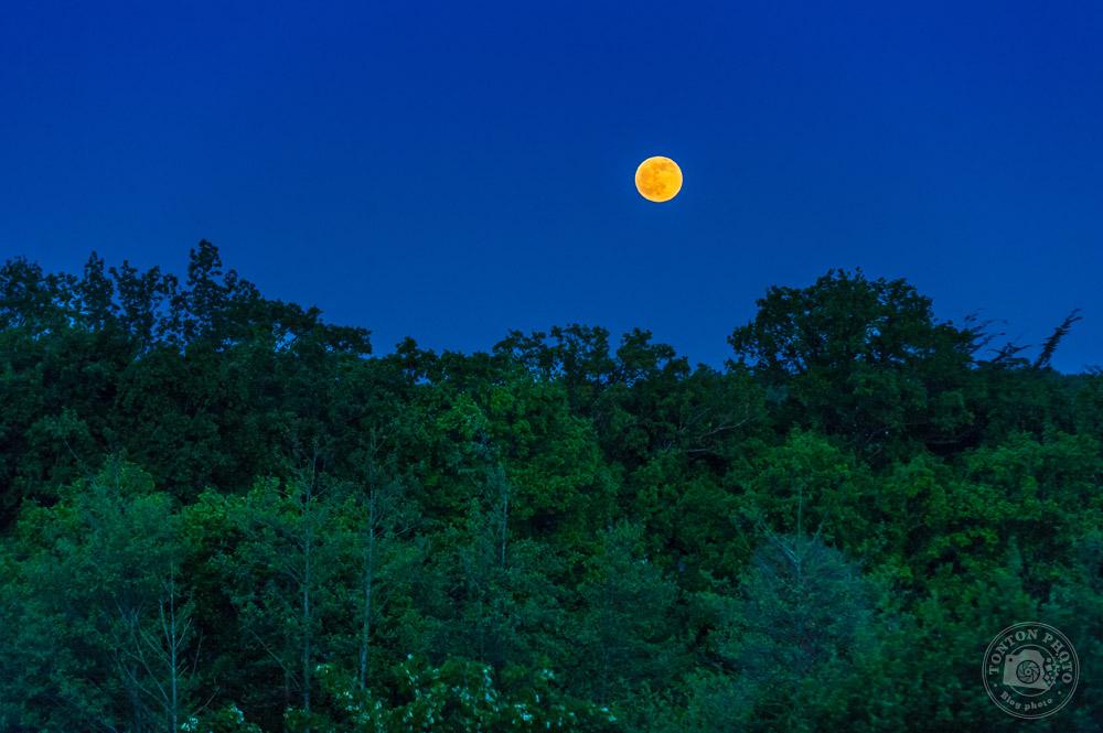 En jouant avec la sensibilité, j'ai réussi à capter ces couleurs surréalistes. Il faisait très sombre, mais pas encore nuit noire, le ciel était très clair, sans aucun nuage, et les lumières de la ville éclairaient légèrement la première rangée d'arbres... Sigma 70-200mm f/2.8 à 170mm - 1/250 - F/5 - ISO 1250<br />© Clément Racineux / Tonton Photo