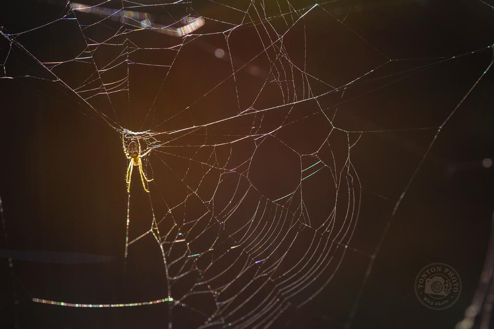 Avec l'humidité automnale, les araignées sont de sortie ! © Clément Racineux / Tonton Photo