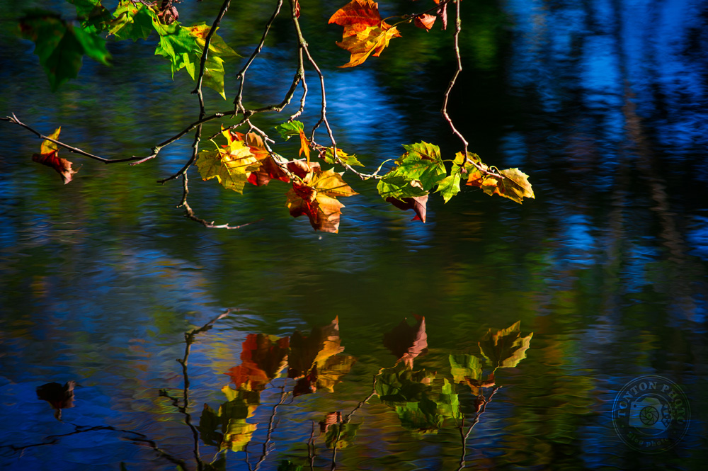 Des feuilles brunes, rousses, jaunes et vertes, et le bleu du ciel, le tout se reflétant dans l'eau... l'automne est magnifique ! © Clément Racineux / Tonton Photo