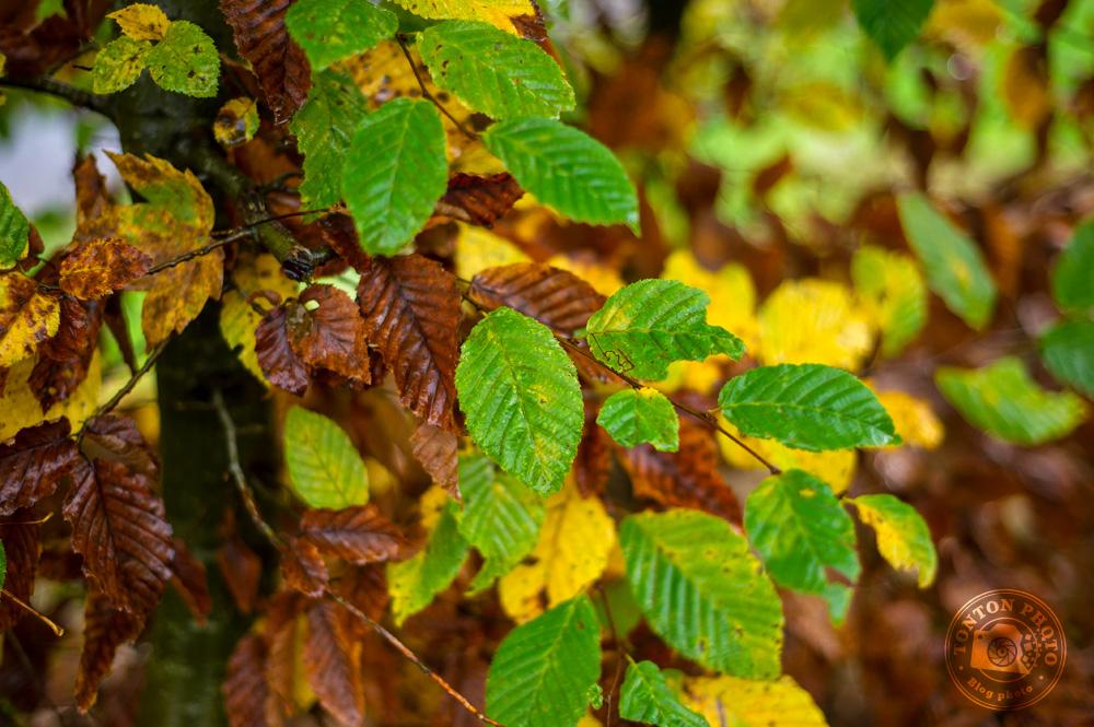 Du jaune, du vert, du brun, il n'y a qu'en automne que l'on voit toutes ces couleurs © Clément Racineux / Tonton Photo