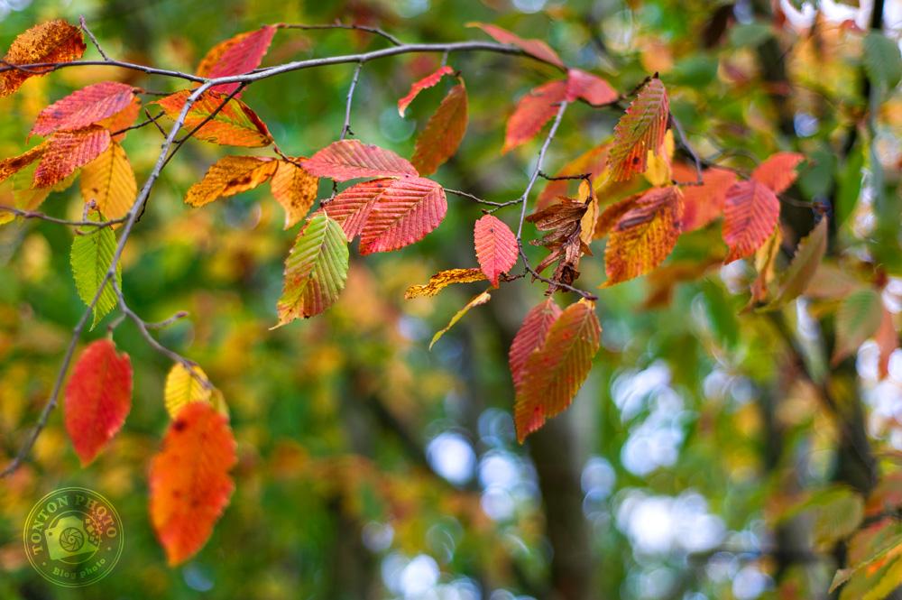 Ah ces couleurs d'orange sanguine, splendide ! Notez le bokeh dû à l'humidité et au ciel trouant à travers les branchages © Clément Racineux / Tonton Photo