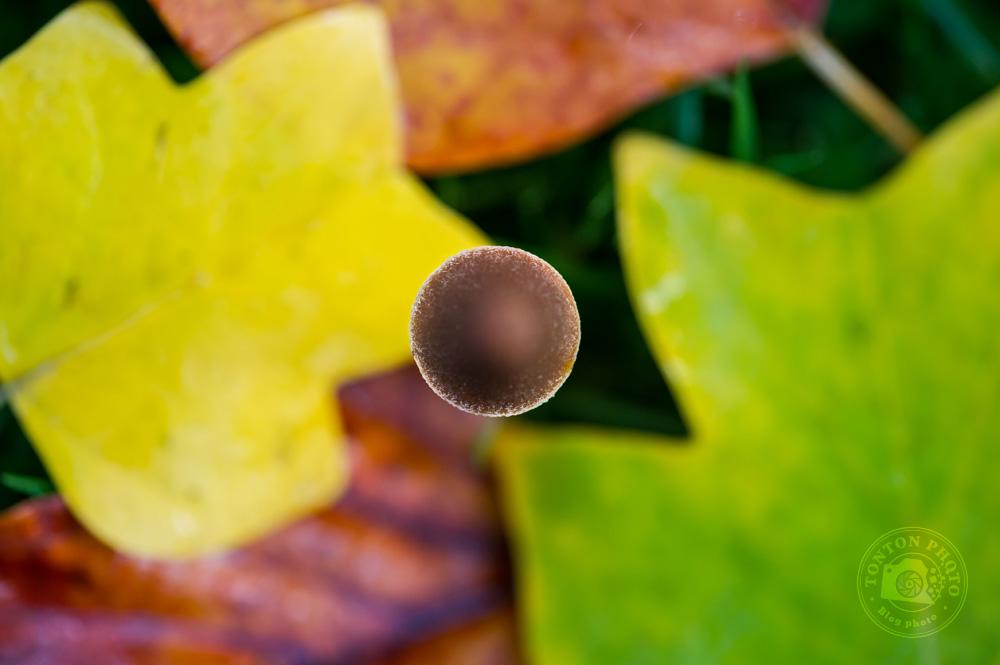 Formes abstraites composées du chapeau d'un petit champignon et de feuilles aux couleurs variées © Clément Racineux / Tonton Photo