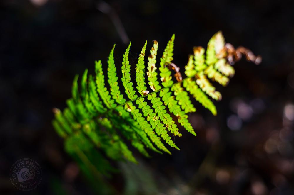 Les belles formes symétriques d'une fougère dans un rayon de soleil © Clément Racineux / Tonton Photo
