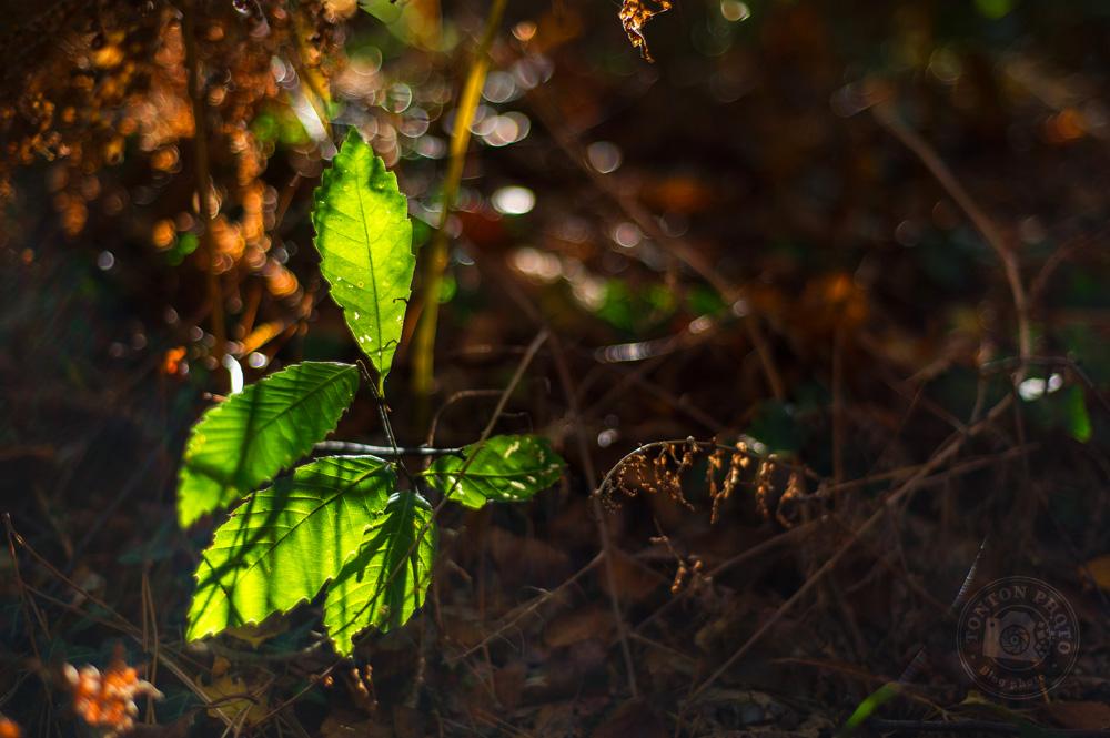 Photographier l'automne et ses couleurs : une branche de jolies feuilles vertes isolée au milieu de la rousseur de feuilles et branches mortes © Clément Racineux / Tonton Photo