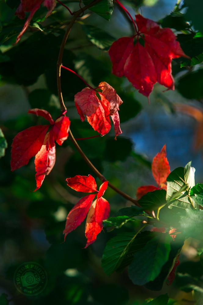 Photographier l'automne et ses couleurs : quelques feuilles rouges au milieu d'une végétation encore toute verte © Clément Racineux / Tonton Photo