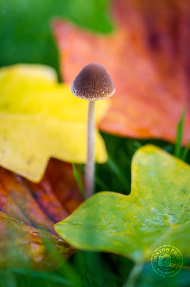 Petit champignon au milieu des feuilles bariolées © Clément Racineux / Tonton Photo