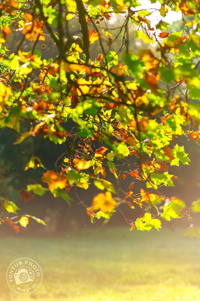 Feuillage multicolore, baigné dans le rétro-éclairage des heures dorées © Clément Racineux / Tonton Photo