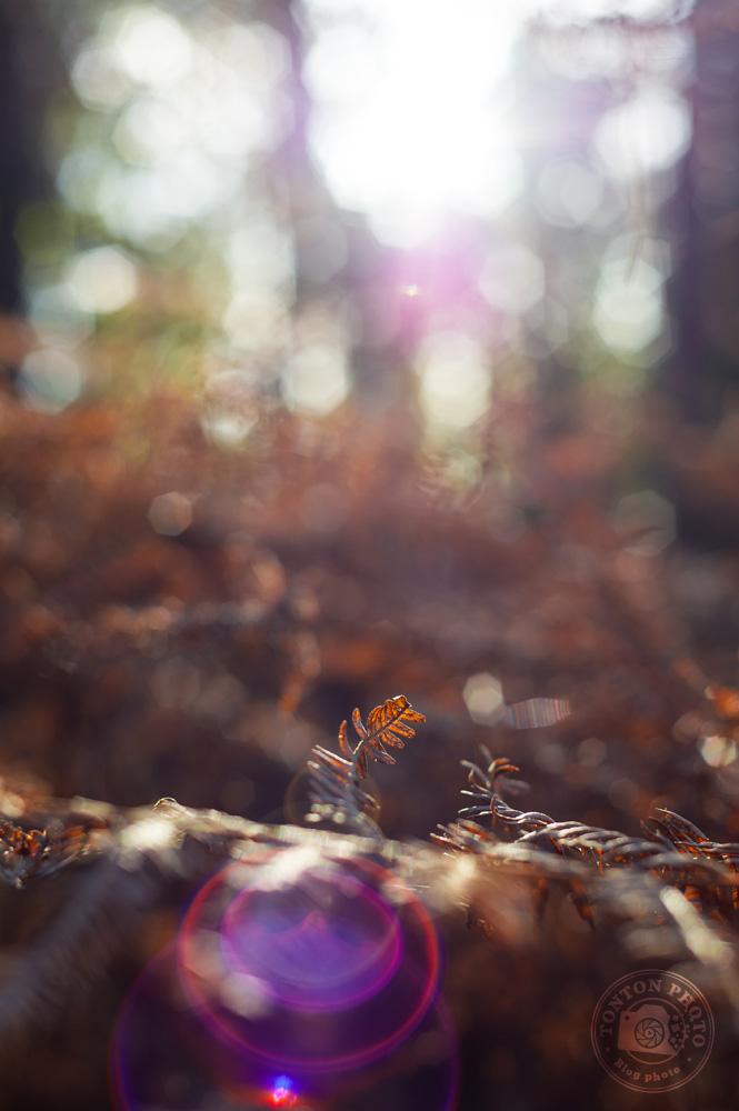 Détail de la fronde d'une fougère morte, rétro-éclairée et baignant dans un halo lumineux © Clément Racineux / Tonton Photo