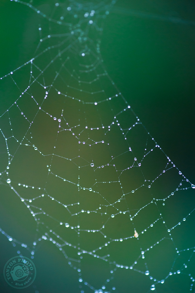 Pas besoin d'aller bien loin : cette toile d'araignée se trouvait entre les barreaux de l'escalier à l'extérieur de mon immeuble ;) © Clément Racineux / Tonton Photo