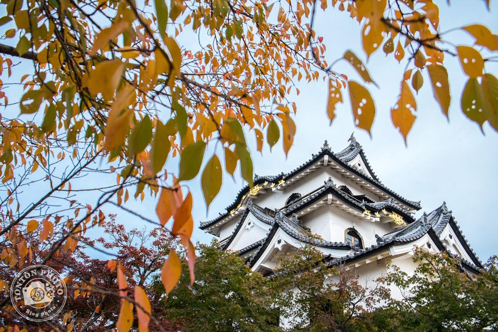 Château médiéval enveloppé des couleurs d'automne, Hikone, Japon © Clément Racineux / Tonton Photo