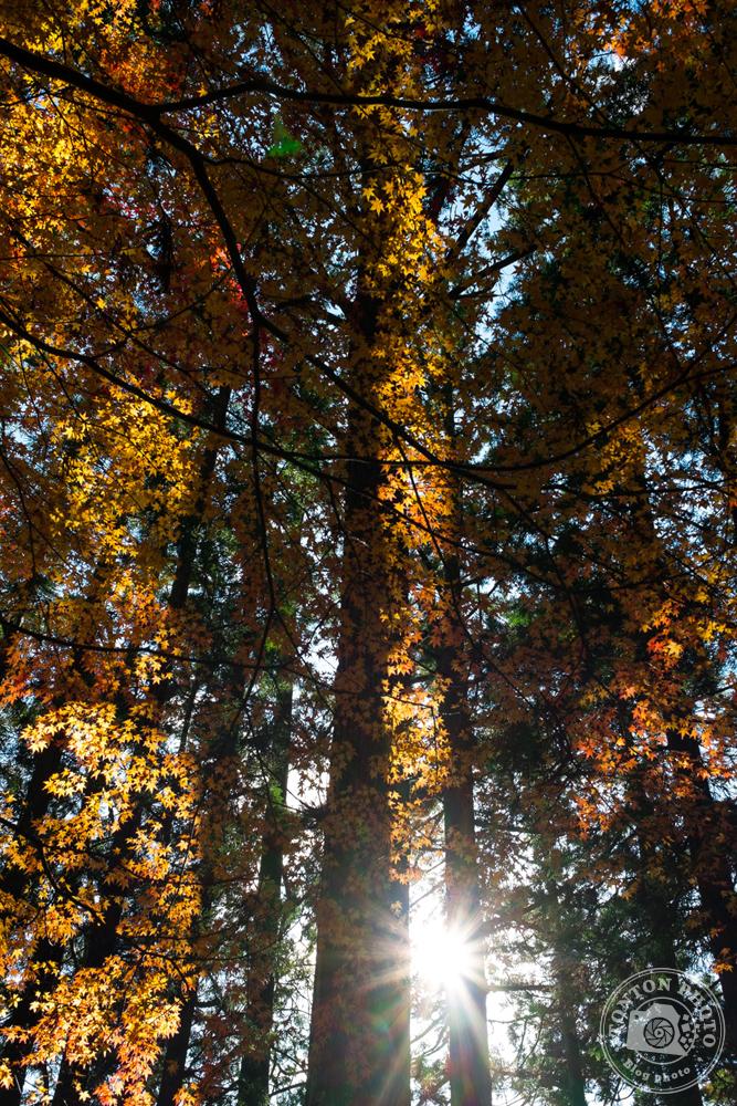 La forêt du sanctuaire bouddhiste d'Okuno-in à contre-jour, Koyasan, Japon © Clément Racineux / Tonton Photo