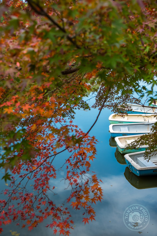Barques et couleurs d'automne sur le lac Sagi-Ike de Nara, Japon  © Clément Racineux / Tonton Photo