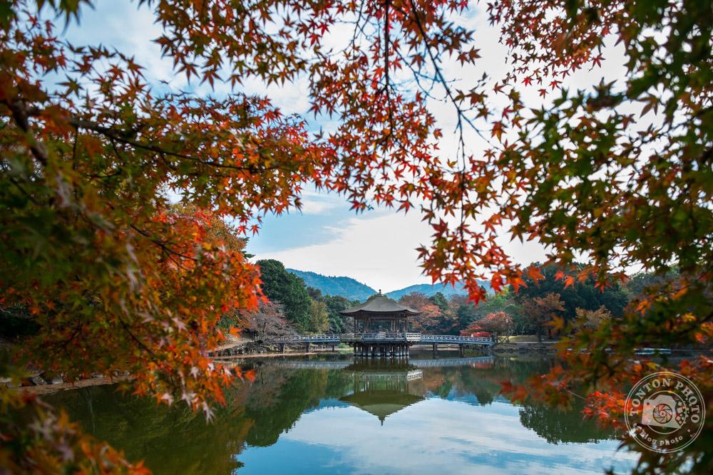 Le pavillon Uki-Mido sur le lac Sagi-Ike de Nara, Japon  © Clément Racineux / Tonton Photo