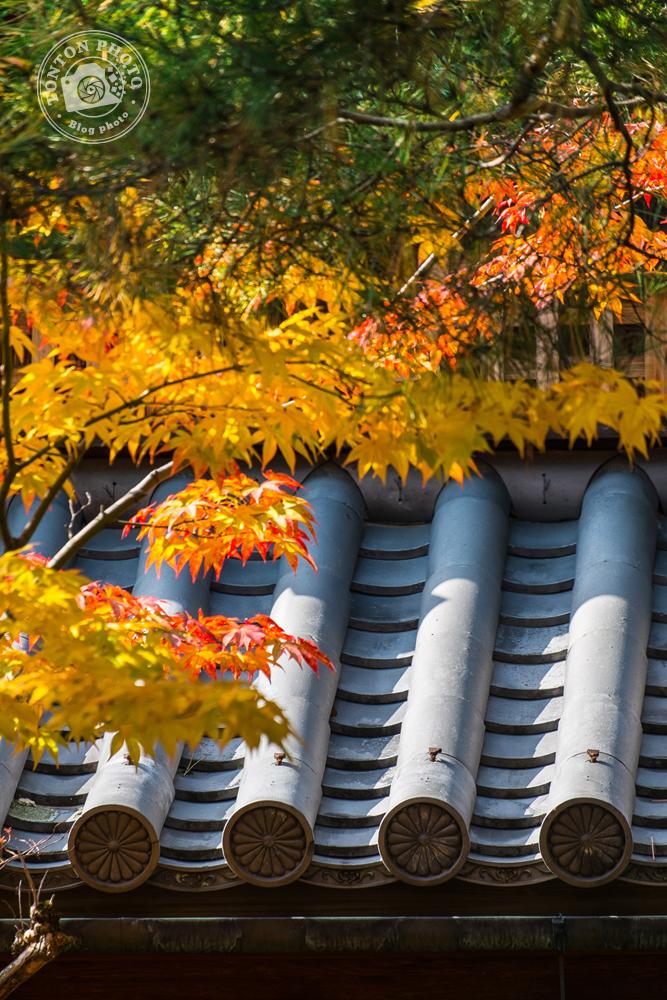 Détail d'une toiture typique sous les couleurs d'automne. Monastère Shunko-in, Kyoto, Japon © Clément Racineux / Tonton Photo
