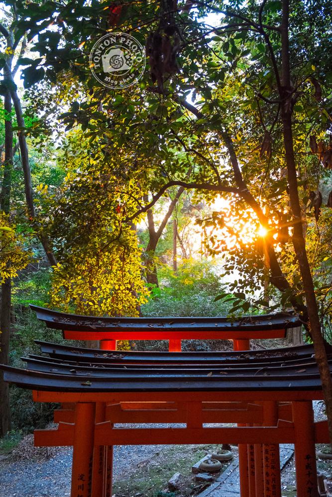 Les fameux torii (portiques shinto de passage entre les mondes profane et sacré) du sanctuaire Fushimi Inari Taisha, Kyoto, Japon  © Clément Racineux / Tonton Photo