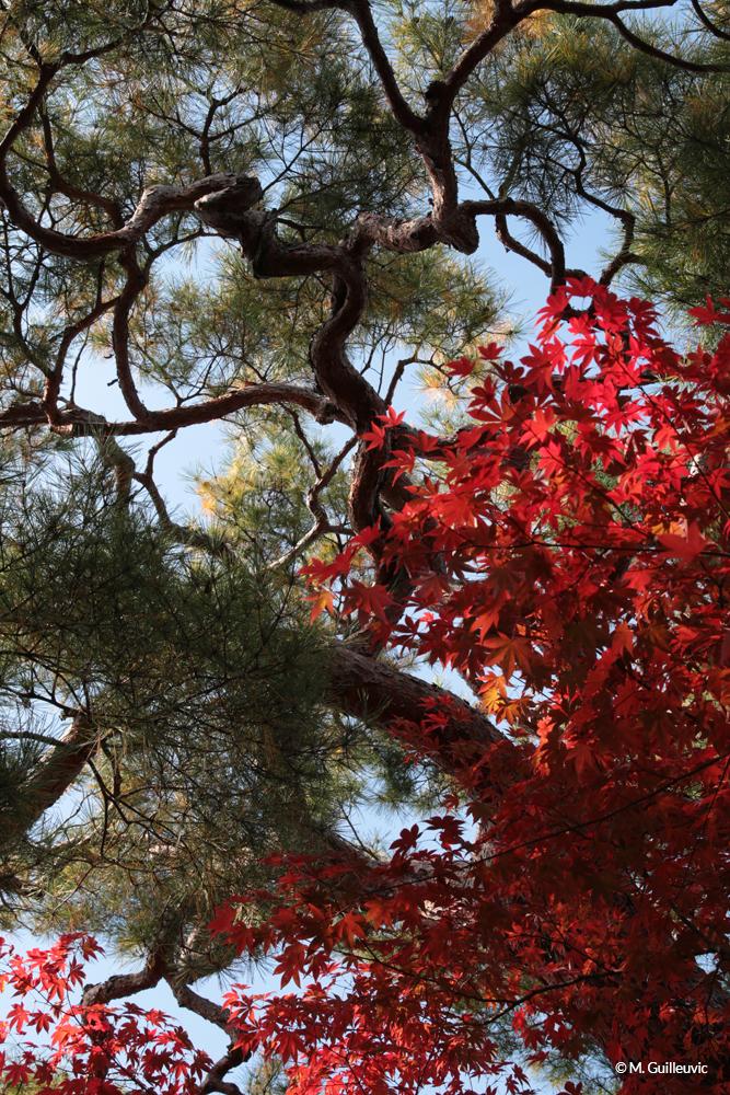 Couleurs de l'automne et arbres aux formes torturées, Koyasan, Japon © M. Guilleuvic