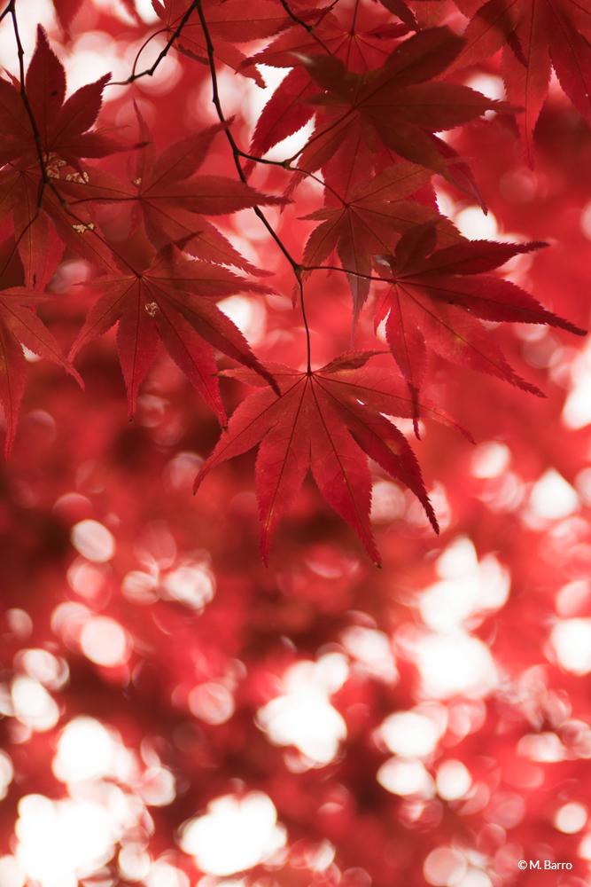 Bokeh et couleurs d'automne surréalistes mais pourtant bien vraies ! Koyasan, Japon © M. Barro