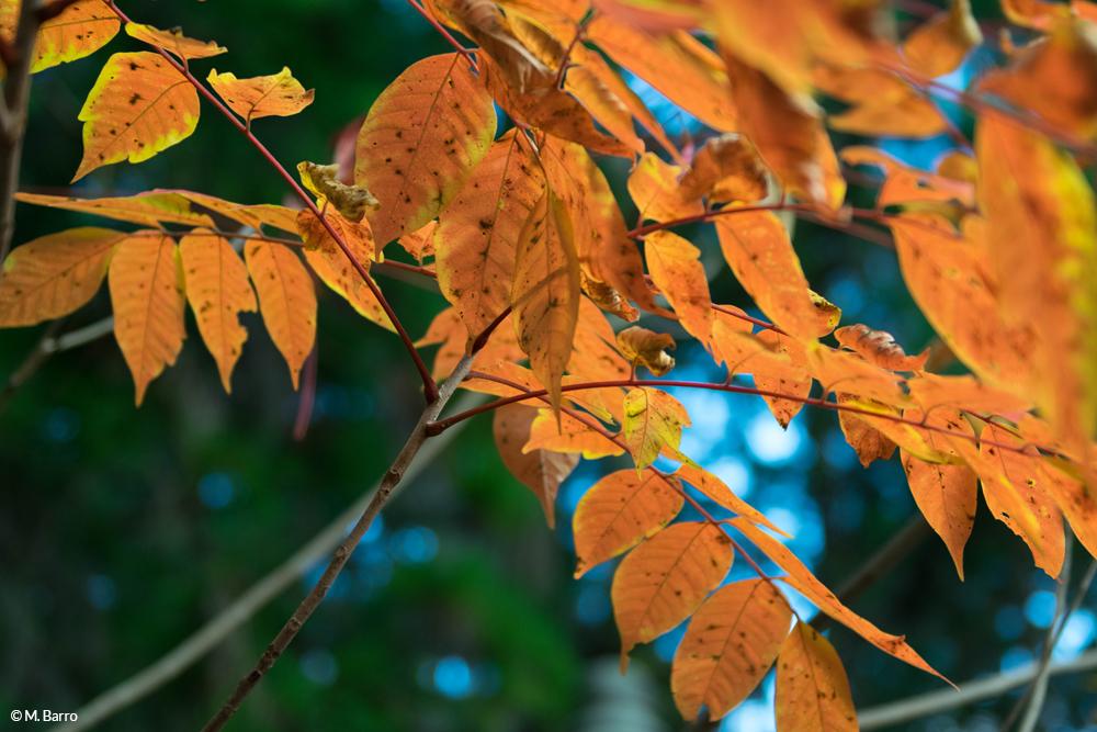 Explosion de couleurs pendant l'automne japonais, à Koyasan © M. Barro
