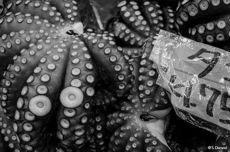 Vente de poulpes sur le marché aux poissons et fruits de mer de Tsukiji, Tokyo, Japon © S. Durand