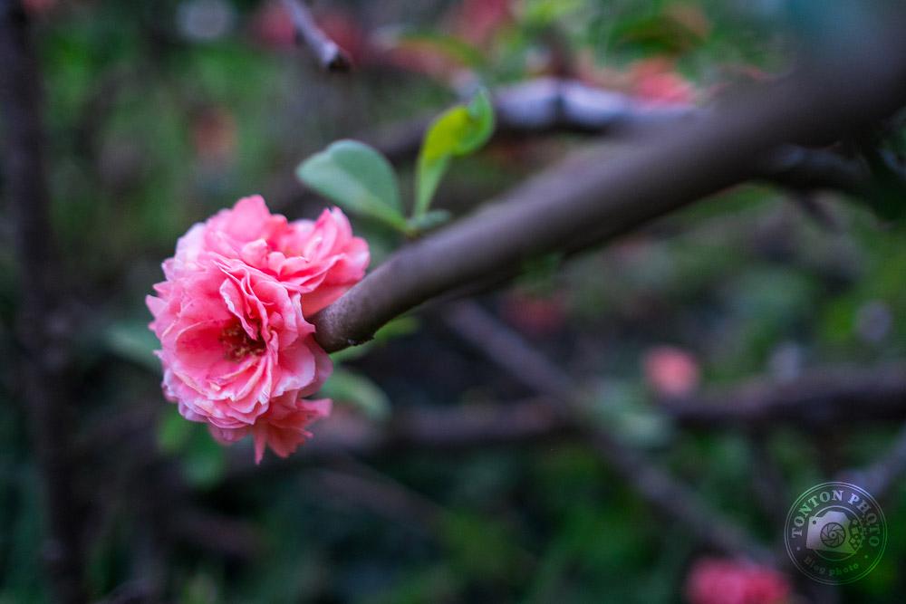Veillez à la lumière | Comment photographier les fleurs de printemps ? © Clément Racineux / Tonton Photo