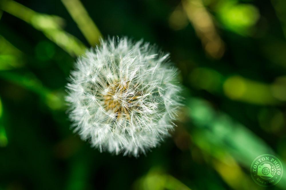Soignez l'arrière-plan | Comment photographier les fleurs de printemps ? © Clément Racineux / Tonton Photo