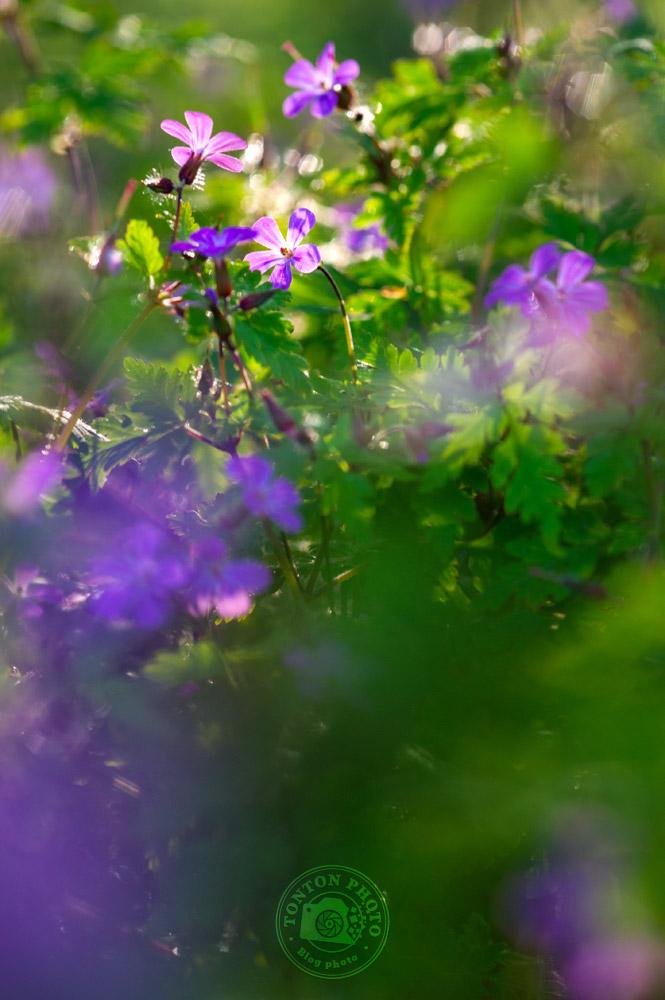 Choisir une faible profondeur de champ pour photographier les fleurs de printemps © Clément Racineux / Tonton Photo