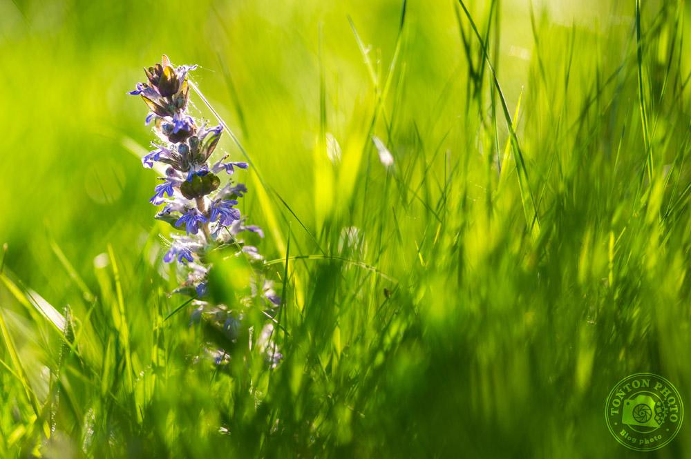 Choisir un centre d'attention clair | Comment photographier les fleurs de printemps ? © Clément Racineux / Tonton Photo