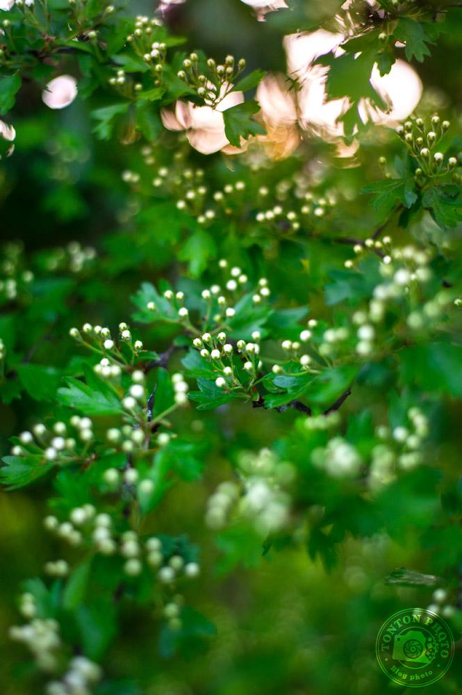 Jouez avec le bokeh | Comment photographier les fleurs de printemps ? © Clément Racineux / Tonton Photo