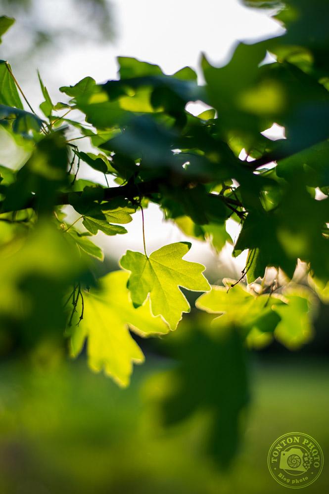 Jouez avec le rétro-éclairage | Comment photographier les fleurs de printemps ? © Clément Racineux / Tonton Photo