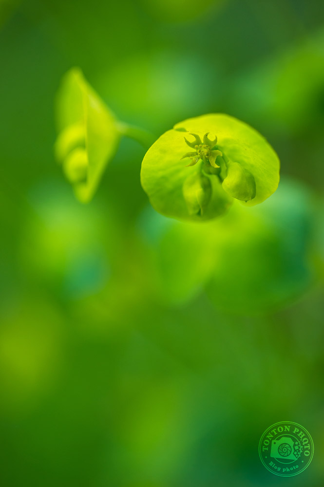 Prenez votre pied en macro-photographie ! | Comment photographier les fleurs de printemps ? © Clément Racineux / Tonton Photo