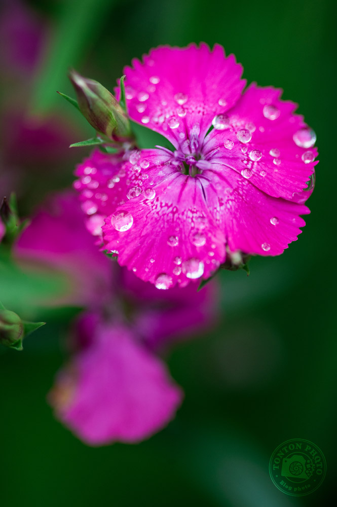 Sortez après la pluie | Comment photographier les fleurs de printemps ? © Clément Racineux / Tonton Photo
