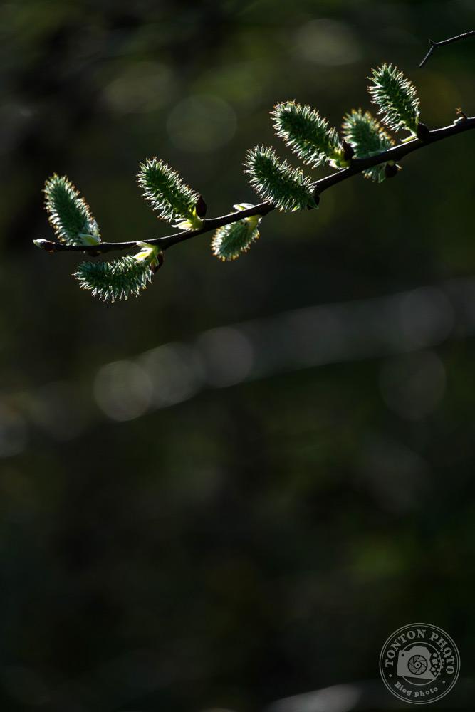 Jouez avec la sous-exposition | Comment photographier les fleurs de printemps ? © Clément Racineux / Tonton Photo