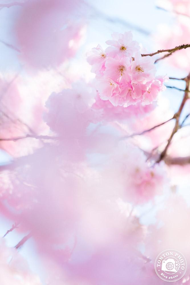 Jouez avec la sur-exposition | Comment photographier les fleurs de printemps ? © Clément Racineux / Tonton Photo