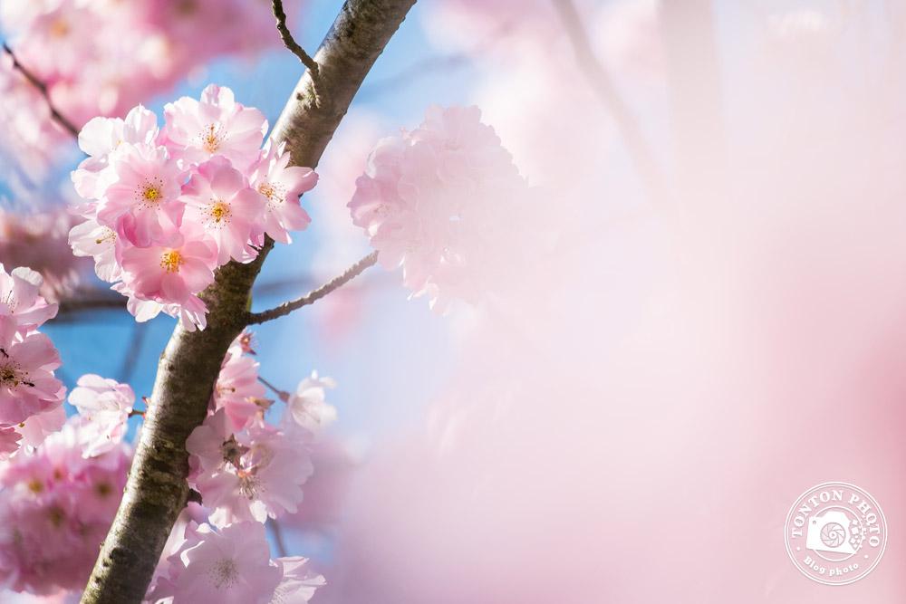 Choisir une faible profondeur de champ pour photographier les fleurs de printemps ? © Clément Racineux / Tonton Photo