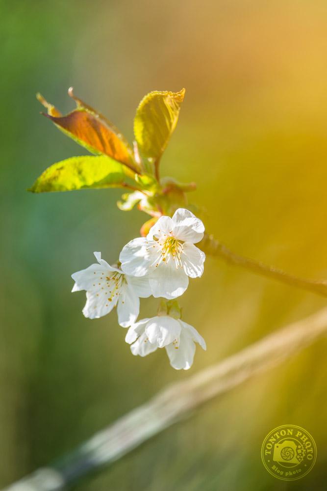 Soyez attentifs à la lumière | Comment photographier les fleurs de printemps ? © Clément Racineux / Tonton Photo