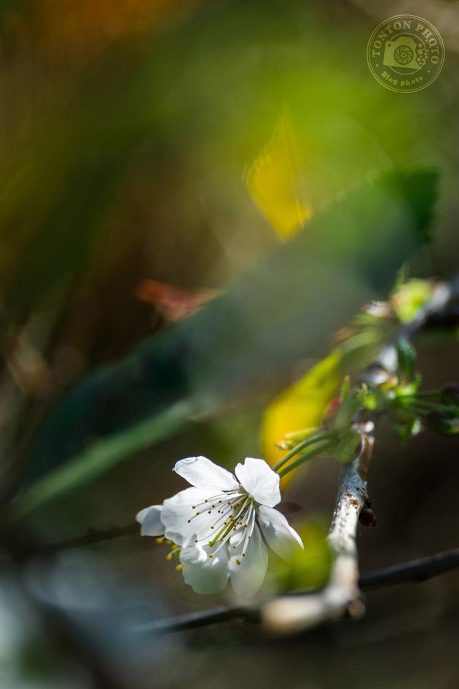 Soignez votre cadrage | Comment photographier les fleurs de printemps ? © Clément Racineux / Tonton Photo