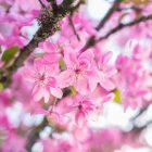 10 conseils et 52 exemples pour photographier le printemps et ses fleurs © Tonton Photo